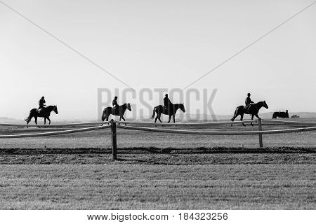 Race Horses Riders Silhouetted Black White