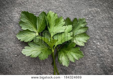 Parsley leaves over black stone background. Top view.