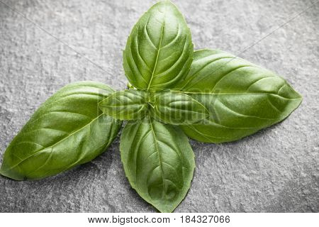 Sweet basil leaves over black stone background. Top view.