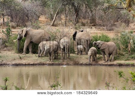 A herd of elephants gathers on the banks of the Ewaso Nyiro River.