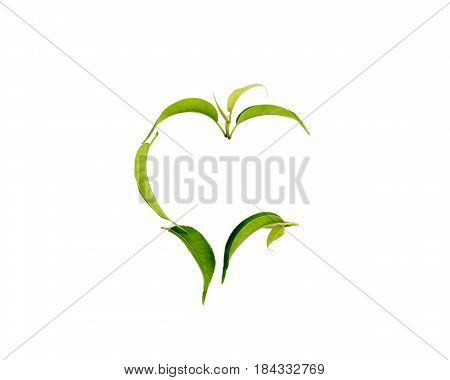 Isolated on white green leaves in the shape of heart and love