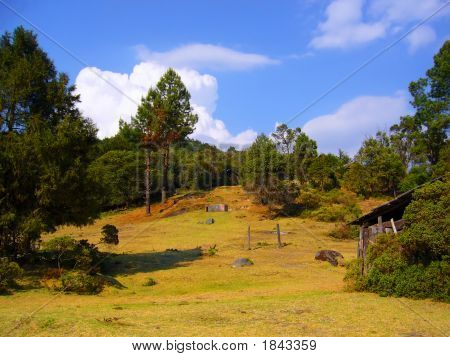 A Rural Spot Between Pines In Mountains