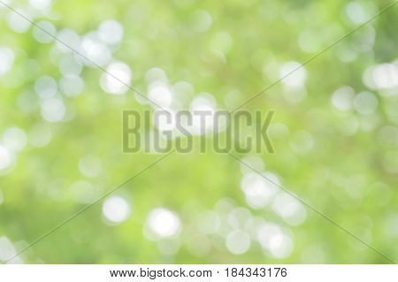 green bokeh / bokeh from tree / blurred tree and bokeh tree / Blurred park with bokeh background / Blurred nature background / green and white background from tree in sun light.
