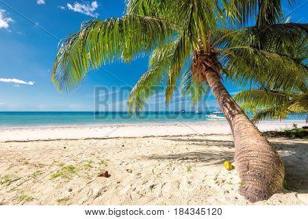 Palm tree on white samd in tropical island.