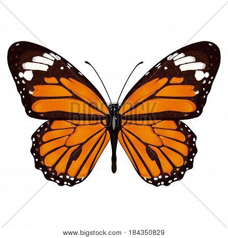 Butterfly With Orange Wings, View From Above, Isolated On White Background. Vector Illustration, Ban