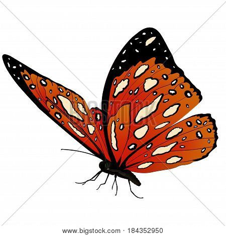 Butterfly With Orange Spotted Wings, Isolated On White Background. Vector Illustration, Banner, Card