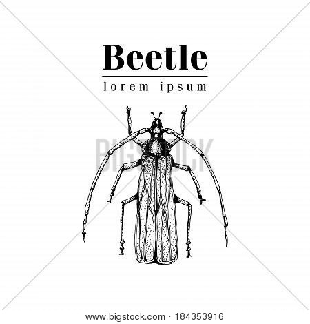 Vector vintage hand drawn vector logo template with beetle, bug, dor, dorr, insect on a white background. Retro illustration