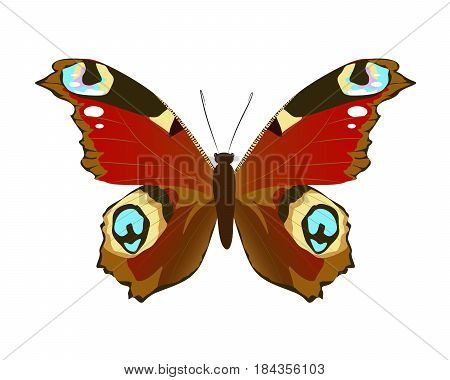 Isolated beautiful butterfly on white background. Red colors.