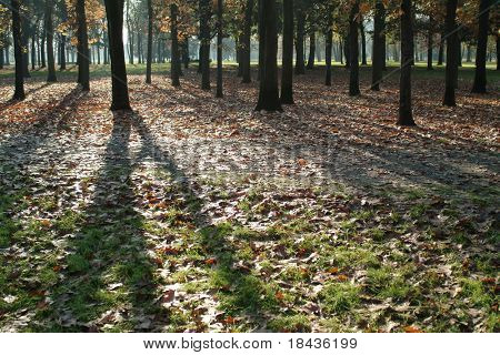 Shadows on green with autumn leaves