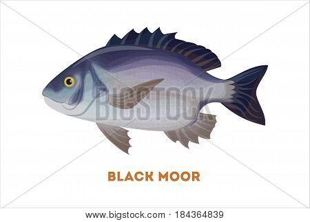 Isolated black moor fish on white background. Fresh food.