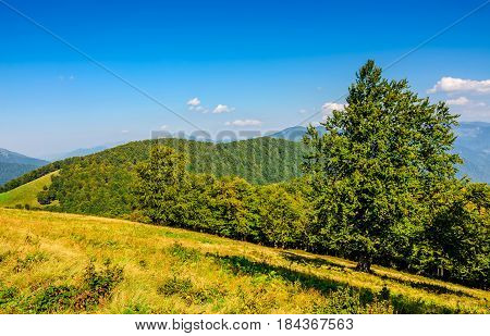 Forest On A Mountain Hill Side