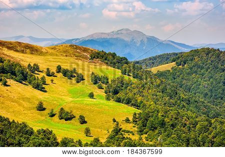 Grassy Meadow On Mountain In Summer