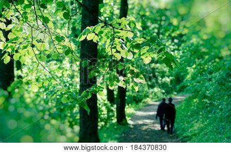 Spring in forest, two elderly persons (pensioners) walks in forest