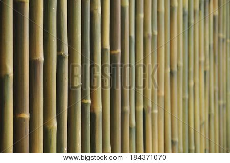 Line of bamboo fence wall background selective focus