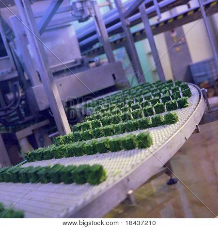 Frozen Food industry
