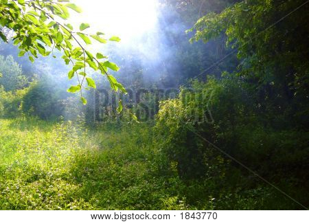 Sunlight Rays Go Through The Cloud In The Forest