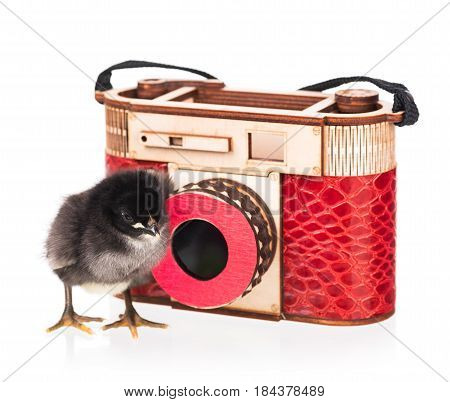 Cute newborn chicken with camera isolated over white background