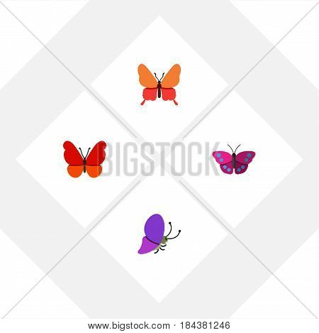 Flat Butterfly Set Of Monarch, Danaus Plexippus, Summer Insect And Other Vector Objects. Also Includes Butterfly, Moth, Archippus Elements.