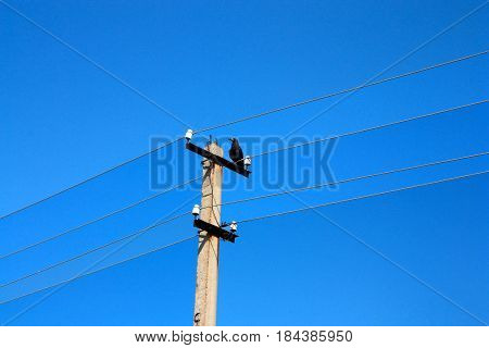 rook sitting on an electric column on a background of blue clear sky