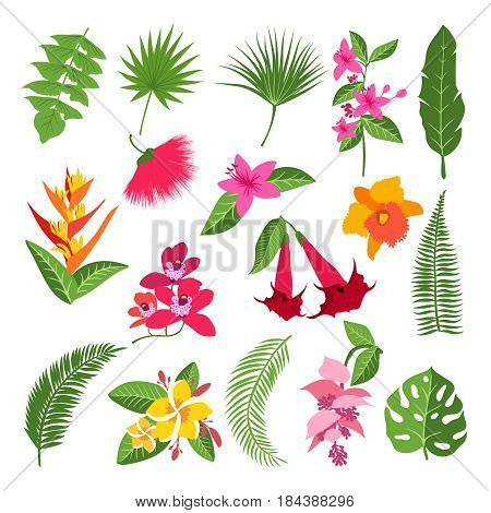 Exotic tropical flowers and leaves. Vector illustrations of plants. Tropical color flower and exotic floral branch with flowers
