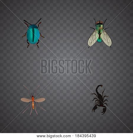 Realistic Gnat, Poisonous, Housefly And Other Vector Elements. Set Of Bug Realistic Symbols Also Includes Blue, Jewel, Dor Objects.