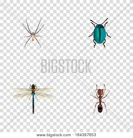 Realistic Damselfly, Emmet, Spider And Other Vector Elements. Set Of Hexapod Realistic Symbols Also Includes Ant, Spinner, Blue Objects.