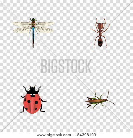 Realistic Locust, Emmet, Ladybird And Other Vector Elements. Set Of Animal Realistic Symbols Also Includes Pismire, Insect, Locust Objects.