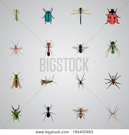 Realistic Spinner, Gnat, Midge And Other Vector Elements. Set Of Animal Realistic Symbols Also Includes Green, Fly, Dragonfly Objects.