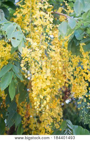 Beautiful Flowers Golden Shower