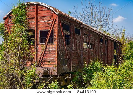 Railway wooden wagon captured by vegetation .