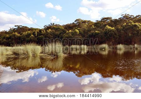 Reeds and cloud reflections in a Lake Couridjah, Thirlmere Lakes National Park, near Picton, NSW, Australia