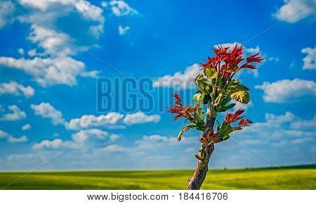 Tree buds budding on cloudy blue sky