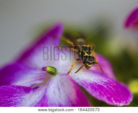Honey bee pollinate beautiful flower in sunny day closeup
