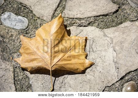 Photo of a dry leave with ground and sunlight