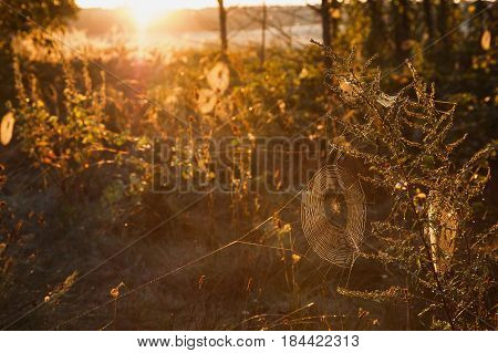 Morning landscape. Warm sunlight. Dew on the web in grass. Web hanging on grass. Web on sun light. Spider web. Nice web. Wet web