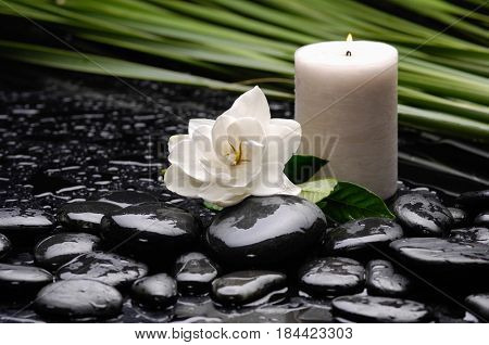 Spa still life with gardenia flower and candle ,plant ,leaf on pebbles