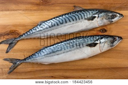 Pair Of Fresh Mackerel On Wooden Board Surface. Top View, Close Up.