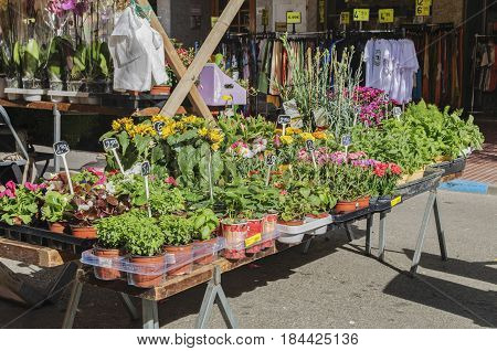 Different flowers for sale at street fair