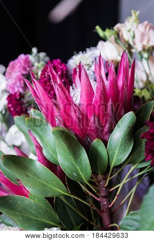 Protea. Blooming Flower. Red Flower. Flower As Crown.