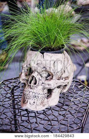 Flower Pot As A A Human Skull. Front View. Decorative Pot. Interior Vase. Creative Pot.