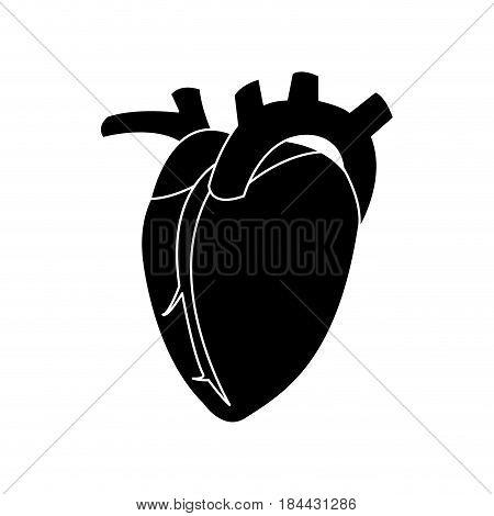 heart human organ healthy silhouette vector illustration