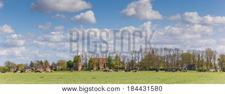 Panorama of dutch cows in front of medieval village Garmerwolde Holland