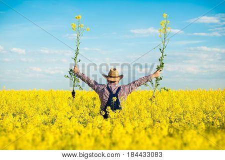 Agronomist or farmer examine blooming canola field