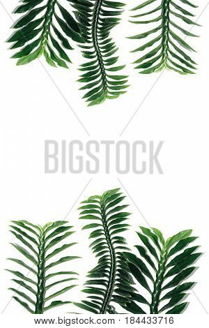 Green Leaf Isolated