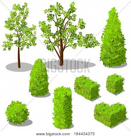 Vector isometric trees and decorative bushes. Vector isometric trees and decorative bushes. For infographic