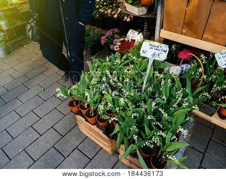 Lily of the valley on sale at florist shop - sometimes written lily-of-the-valley scientific name Convallaria majalis