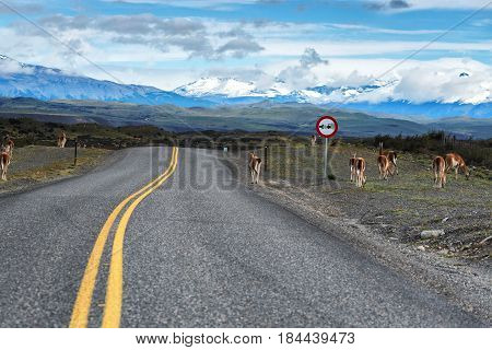 Highway towards Patagonia in Chile with guanacos on the pavement