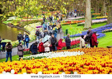 Keukenhof, Netherlands - April, 2017: Tourists walking throung colorful tulips on the river bank in Keukenhof park in Amsterdam area, Netherlands. Spring blossom in Keukenhof