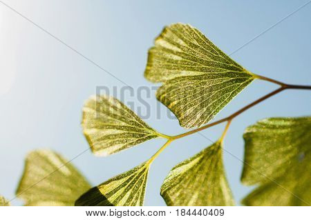 Natural texture of a green leaf on a blue background. Macro Photo of leaf. Leaf on a blue background. Leaf on the branch. The sun shines on the leaf. Texture of green leaf. A leaf of a plant.