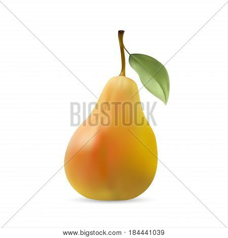 Realistic illustration of pear with leaf vector illustration isolated on white background